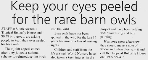 Look out for Barn Owls