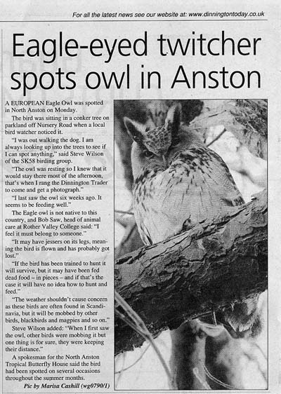 Stardom of local Eagle Owl
