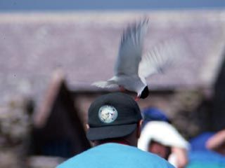 Attacked by a Tern