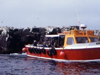 Boat trip to the Farnes